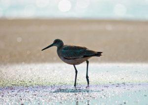 bird-in-surf